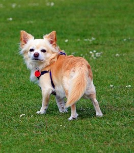 Pes v domácnosti – jaké vybrat plemeno?