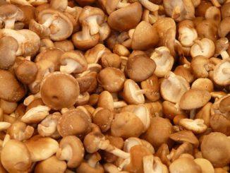 Houba Shiitake jako součást redukční diety