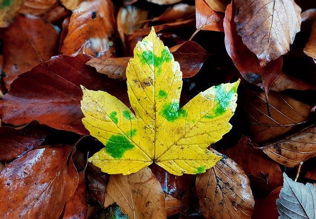 Pět tipů, jak přežít podzim