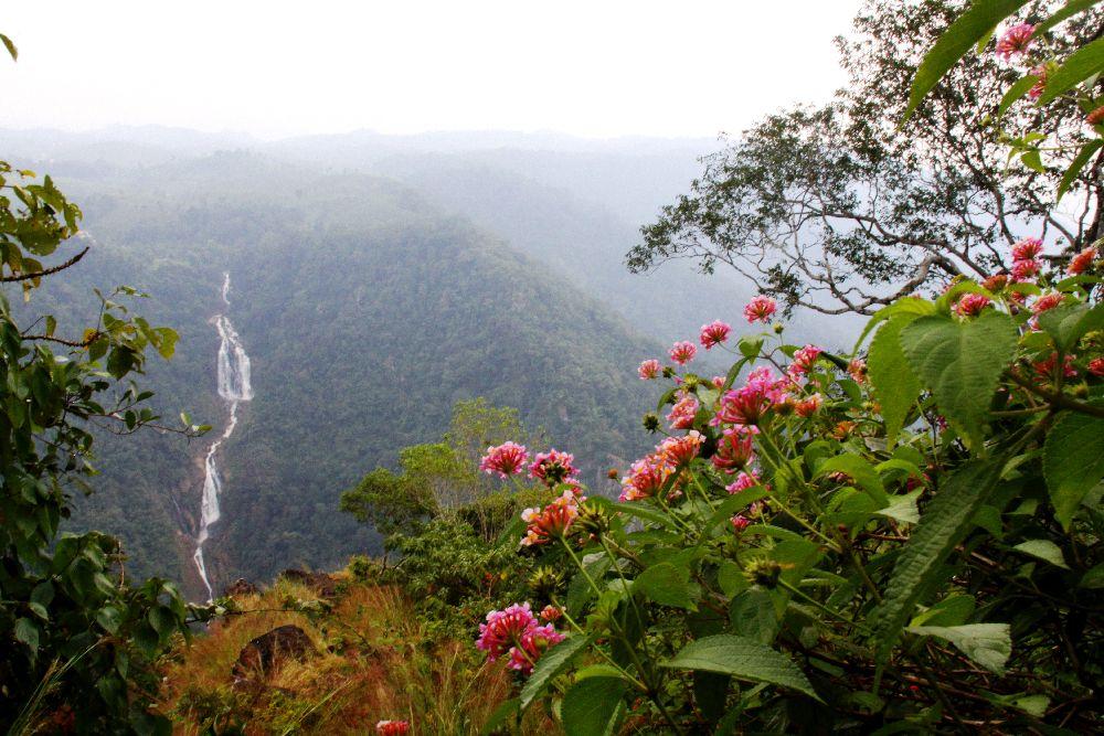 12035-Kerala Wayanad hill country side view flowers waterfall
